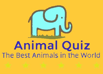 Animal Quiz - The Best Animals in the World